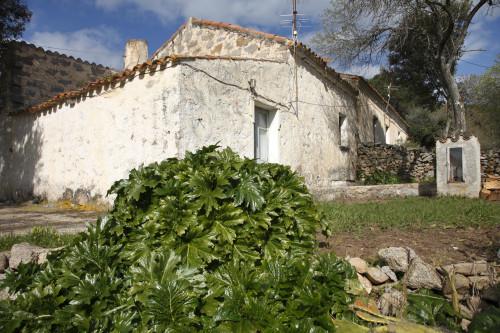BiancaCumunu di Sant'Antoni di GadduraAla a mezzudì di lu stazzu spaltutu e la  madonnina