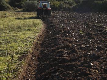 Taglia la terra Località San Pasquale, Monti Russoni - Comune di Tempio Pausania  Aratura campi per semina di foraggio. Sullo sfondo Monticanu