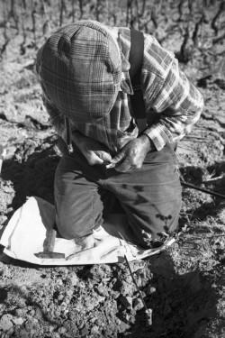 Cant'è bassa la tarra Località Caciolu - Comune di Palau  Conduzione di piccola vigna con metodi tradizionali. Innesti