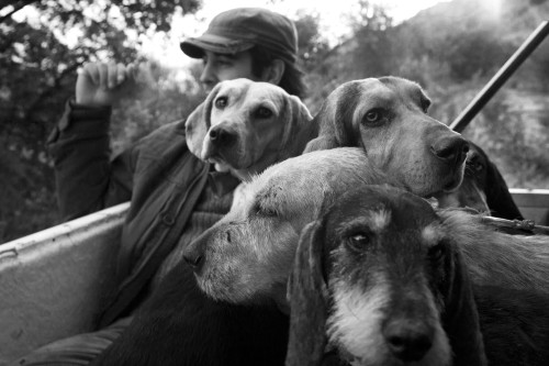 """I caniLocalità Cultisia - Comune di Luogosanto  Caccia grossa, """"Compagnia La Cilata"""", trasferimento dei cani e dei cacciatori verso una battuta, a bordo di un fuoristrada"""