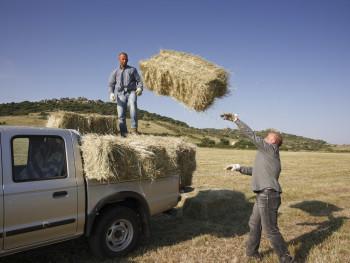 Lancio Località Silonis, la Grazia - Comune di Luras  Fienagione, il carico