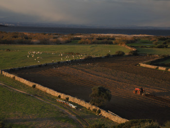 Vasche da bagno #1 Barrabisa/Porto Puddu/Foce del Liscia- Comuni di Palau e Santa Teresa. Aratura dei campi nella bassa valle del Liscia. Sullo sfondo la Corsica.