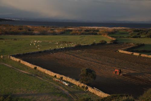 Vasche da bagno #1  Barrabisa, Porto Puddu, Foce del Liscia - Comuni di Palau e Santa Teresa Gallura  Aratura dei campi nella bassa valle del Liscia. Sullo sfondo la Corsica