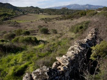 Vigni e Monti  Contra Quadrada - Comune di Monti  Vigne nelle alture di Monti nelle vicinanze stazzi abbandonati, sullo sfondo il monte Limbara