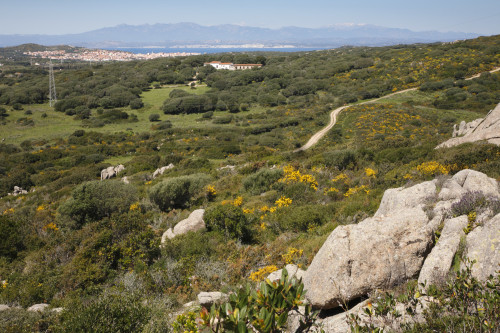 Isole gemelle  Località Lu Nalboni - Comune di Santa Teresa Gallura Stazzu Sterrithogghju.  Sullo sfondo Santa Teresa e la Corsica