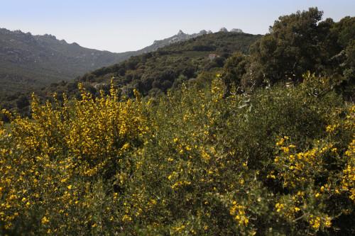 Stazzu La Traessa  La Prugna, La Traessa - Comune di Luogosanto  Stazzu La Traessa e Monti di Tassu
